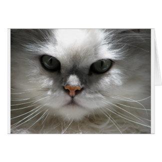 Chinchilla Persian Cat Cards