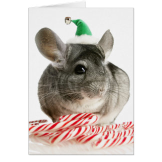 Chinchilla with candy canes greeting card