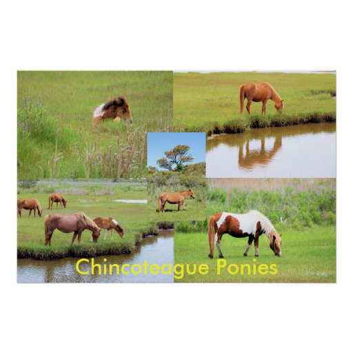 Chincoteague Ponies Collage Poster