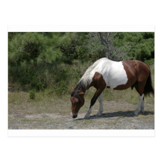Chincoteague Pony Postcard