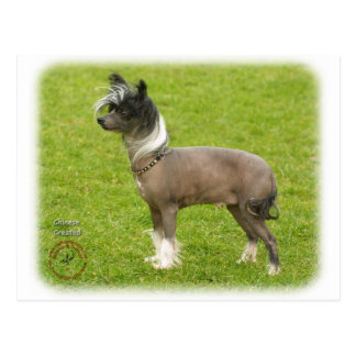 Chinese Crested 8P086D-23 Postcard
