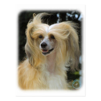 Chinese Crested 9W016D-149 Postcard