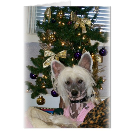 Chinese Crested Christmas Card