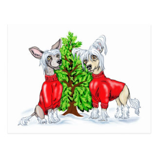 Chinese Crested Christmas Tree Postcard