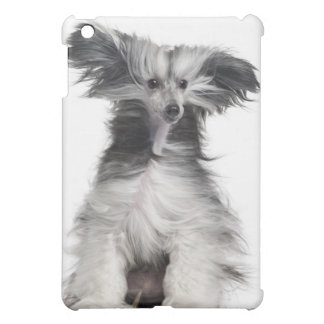 Chinese Crested Dog (15 months old) in the wind iPad Mini Covers