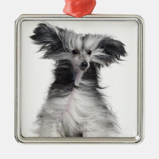 Chinese Crested Dog (15 months old) in the wind Silver-Colored Square Decoration