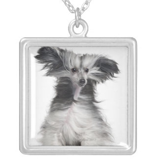 Chinese Crested Dog (15 months old) in the wind Silver Plated Necklace