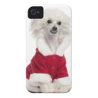 Chinese Crested Dog (1 year old) wearing a iPhone 4 Case