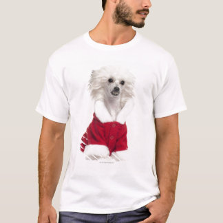Chinese Crested Dog (1 year old) wearing a T-Shirt