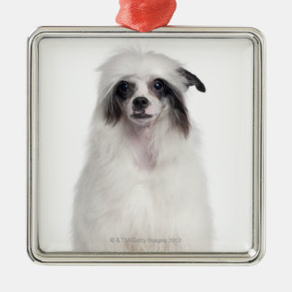 Chinese Crested Dog (7 months old) Christmas Ornament