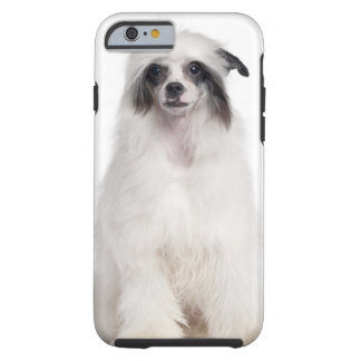 Chinese Crested Dog (7 months old) Tough iPhone 6 Case