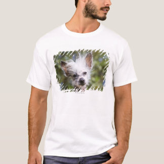 CHINESE CRESTED DOG (HAIRLESS) T-Shirt