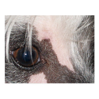 Chinese_Crested eyes.png Postcard