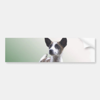 Chinese Crested Show Dog Bumper Sticker