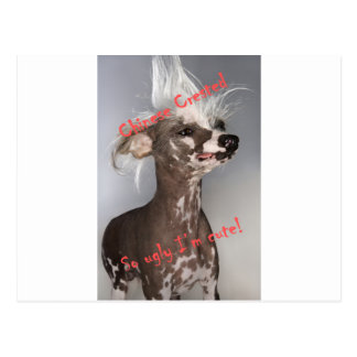 Chinese Crested So Ugly I'm Cute Postcard