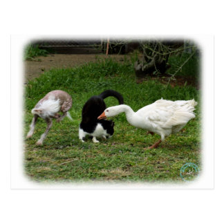 Chinese Crested with Cat and Goose 9P31D-67 Postcard