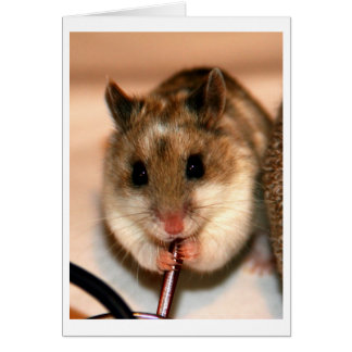 Chinese Dwaf Hamster Card
