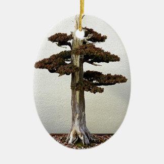 Chinese Juniper Bonsai Tree Ceramic Oval Decoration