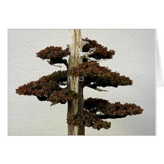 Chinese Juniper Bonsai Tree Greeting Card