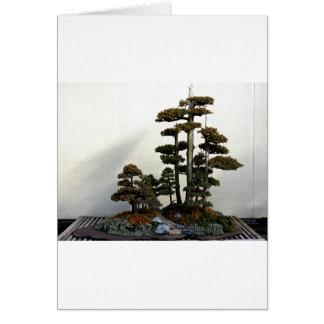 Chinese Juniper Bonsai Trees Cards