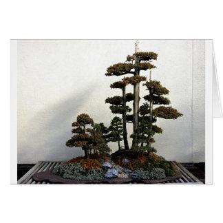 Chinese Juniper Bonsai Trees Greeting Card