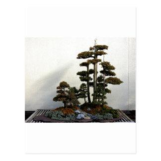 Chinese Juniper Bonsai Trees Post Cards