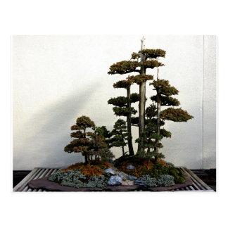 Chinese Juniper Bonsai Trees Postcard