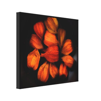 Chinese Lantern (Physalis)Fruits Wrapped Canvas