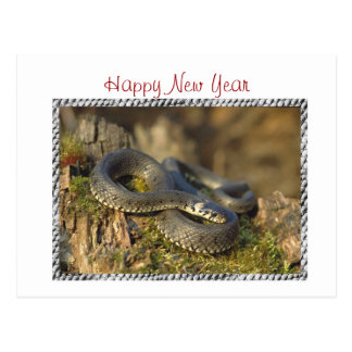 Chinese New Year Vietnamese Tet Year of the snake Post Card