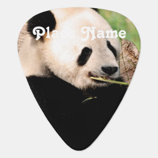 Chinese Panda Guitar Pick