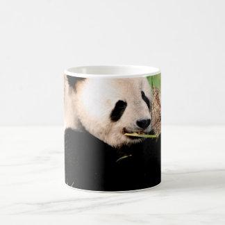 Chinese Panda Coffee Mugs