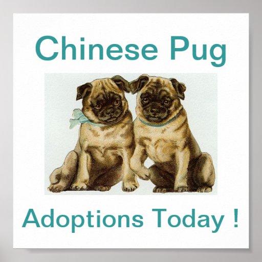 Chinese Pug Dog Adoptions Today Sign Print