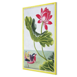 Chinese Red Water Lily, Volume I, plate 82, from ' Canvas Print