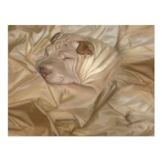 Chinese Shar Pei Camouflaged in Wrinkles Postcard