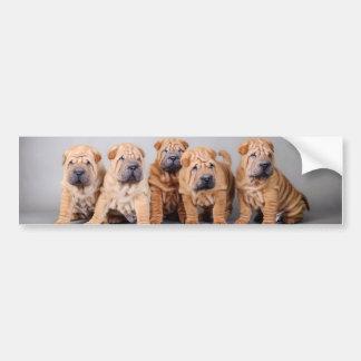 Chinese Shar pei puppies Bumper Sticker