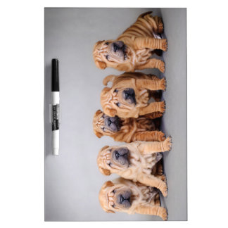 Chinese Shar pei puppies Dry Erase Board