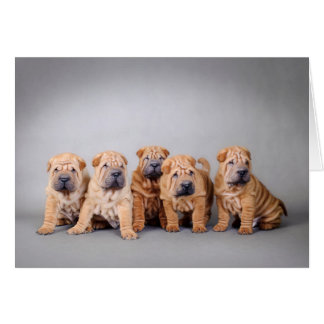 Chinese Shar pei puppies Greeting Card