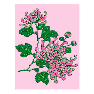 Chinese spider chrysanthemums  - soft pink postcard