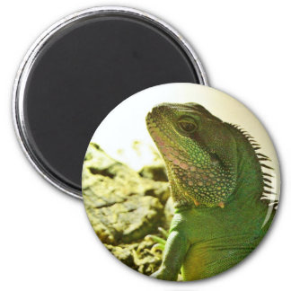 Chinese Water Dragon 6 Cm Round Magnet