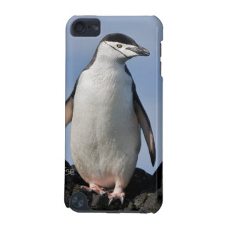 Chinnie iPod Touch Speck Case iPod Touch 5G Case
