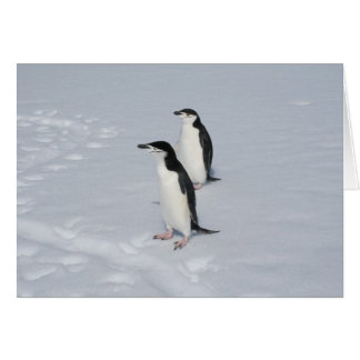 Chinstrap penguins (HM) card