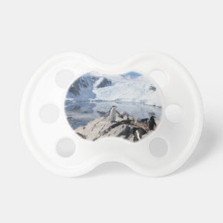 Chinstrap Penguins in Antarctica Pacifier