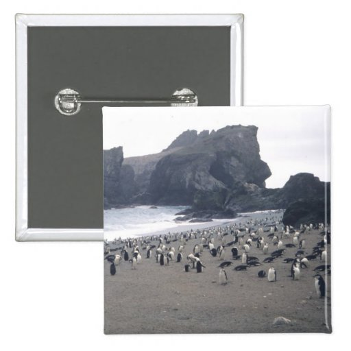 Chinstrap Penguins on Seal Island Buttons