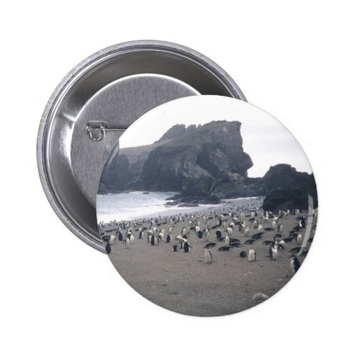 Chinstrap Penguins on Seal Island Button