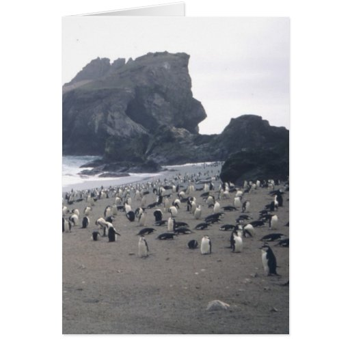Chinstrap Penguins on Seal Island Cards