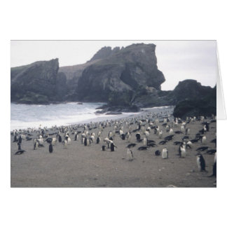 Chinstrap Penguins on Seal Island Greeting Card
