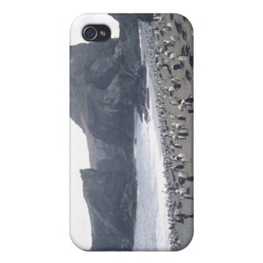 Chinstrap Penguins on Seal Island iPhone 4/4S Covers
