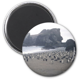 Chinstrap Penguins on Seal Island 6 Cm Round Magnet