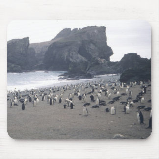 Chinstrap Penguins on Seal Island Mouse Pads