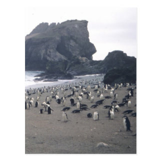 Chinstrap Penguins on Seal Island Postcard